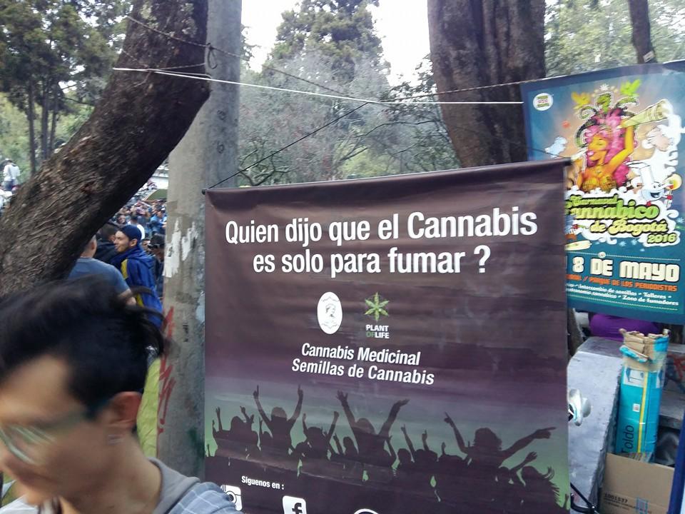 Carnaval cannábico 13