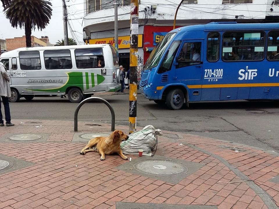 Bogotá 11